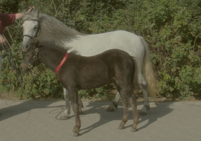 store hestedag i roskilde